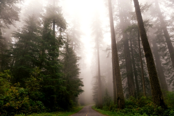 Redwood National Park - The West Coast of America