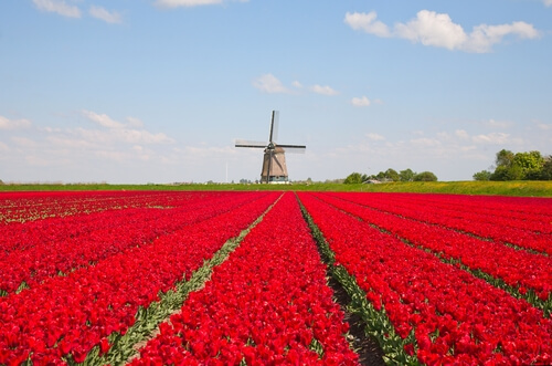 Holland - The Land of Tulips