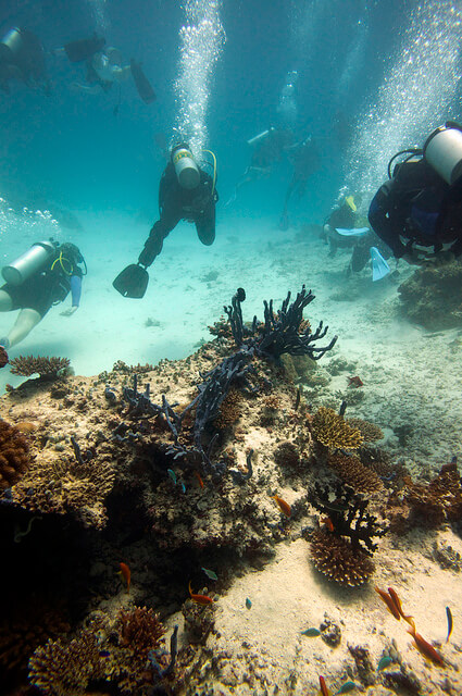 Into The Blue: World's Best Diving Destinations