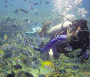 Best Diving Destinations