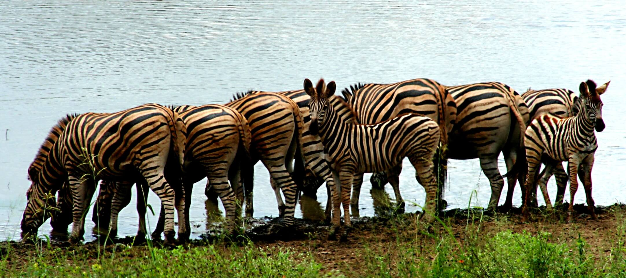 Five Essentials for an African Safari - Thomas Cook India Travel Blog
