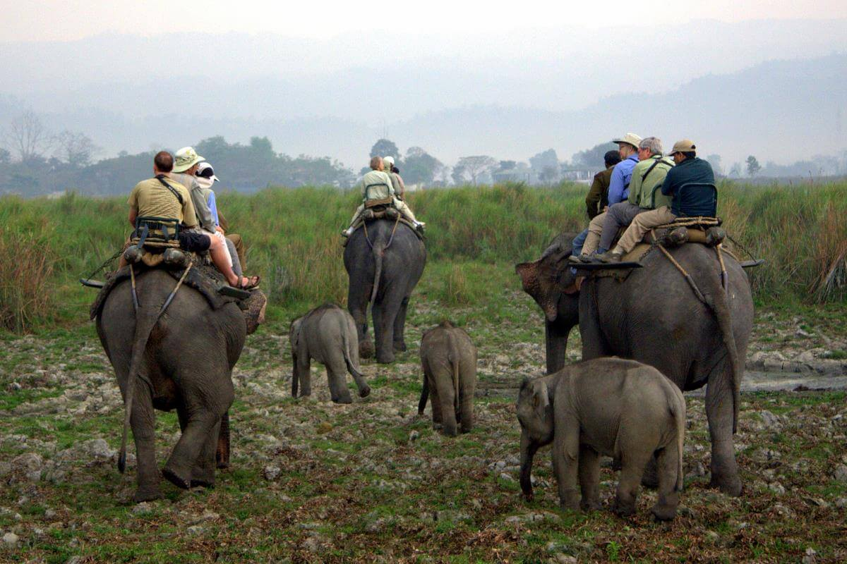Kaziranga National Park (Assam)