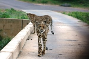 Explore Spectacular Nature Parks in Africa - Thomas Cook India