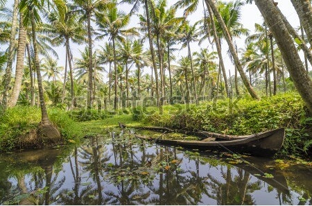 Kerala Backwaters Scenery with Palm Trees and Sunken Canoe
