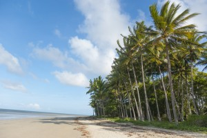 Beach with palm tree jungle at seafront. Tropical Port Douglas