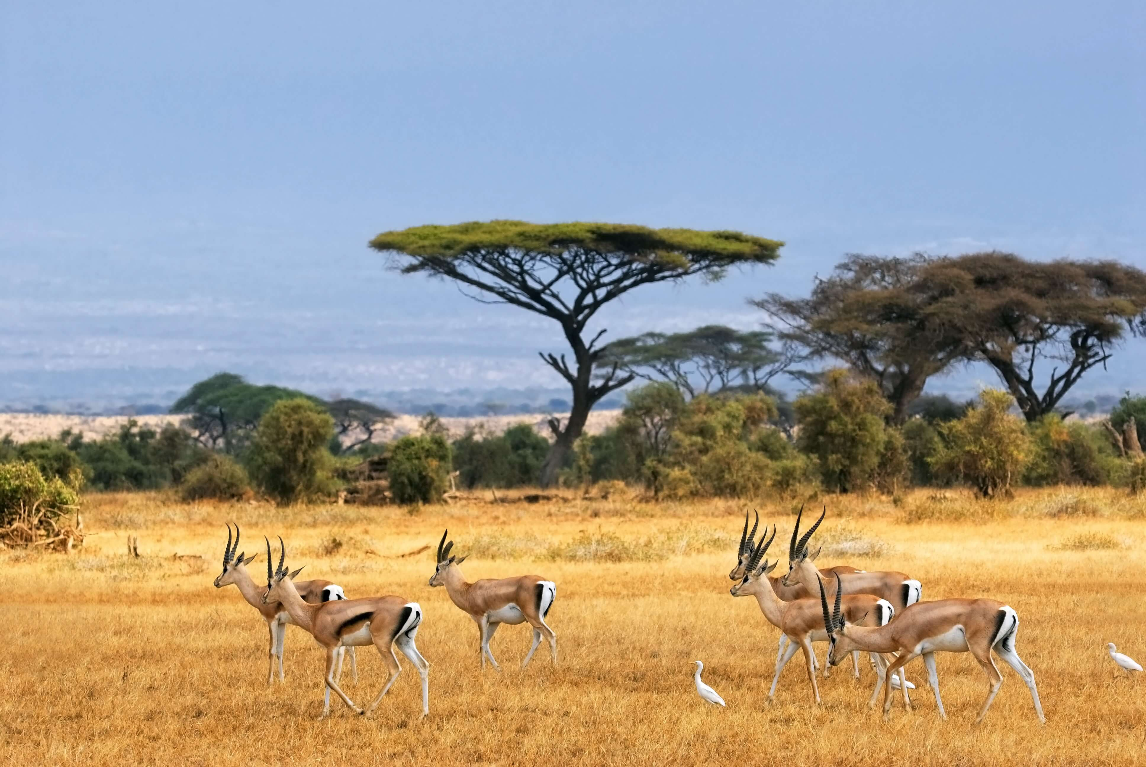 African Landscape with Gazelles - Nature Parks in Africa