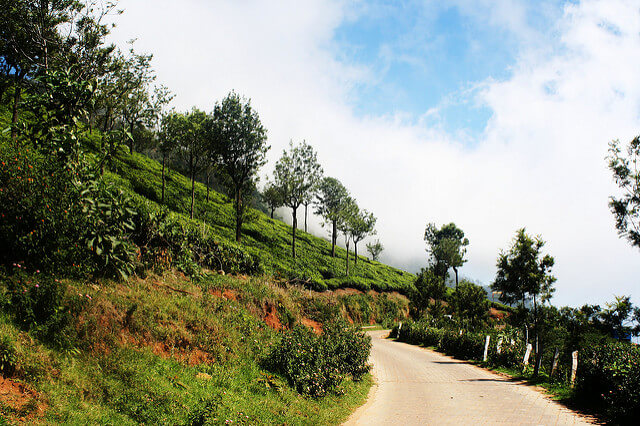 On Road to Pykara Falls at Ooty - Thomas Cook India Travel Blog