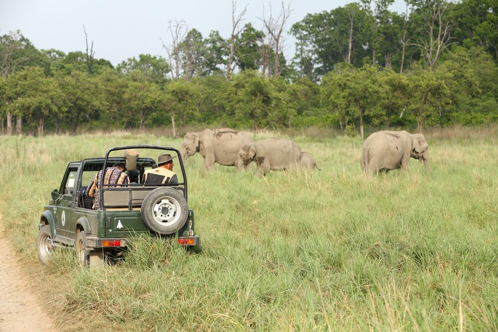 Jeep Safari - Jim Corbett National Park