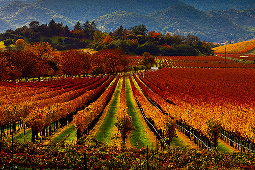 Top wine destinations in America