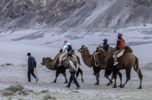 Camel safari in Nubra Valley, Ladakh