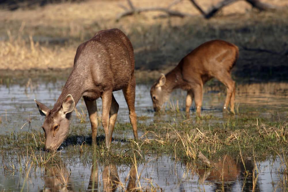 Keoladeo National Park - Rajasthan Wildlife