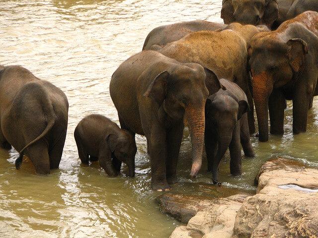 Sri Lanka – Elephant Orphanage