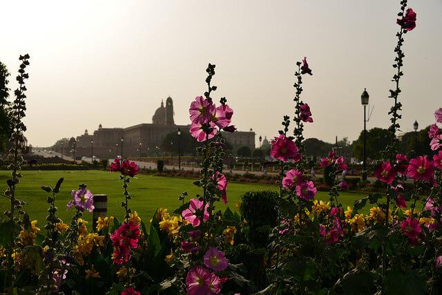 Delhi, NCR - Floral Destination