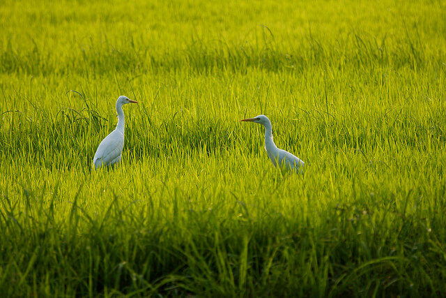 best places in India for birdwatching