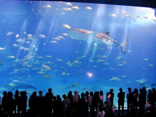 dubai-aquarium01