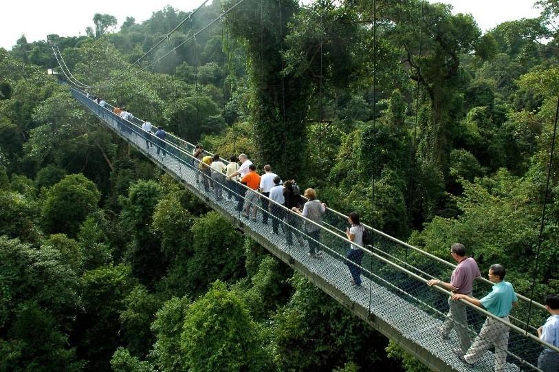 Wooden Bridge - Singapore