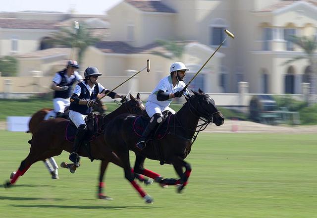 Camel Polo - Dubai