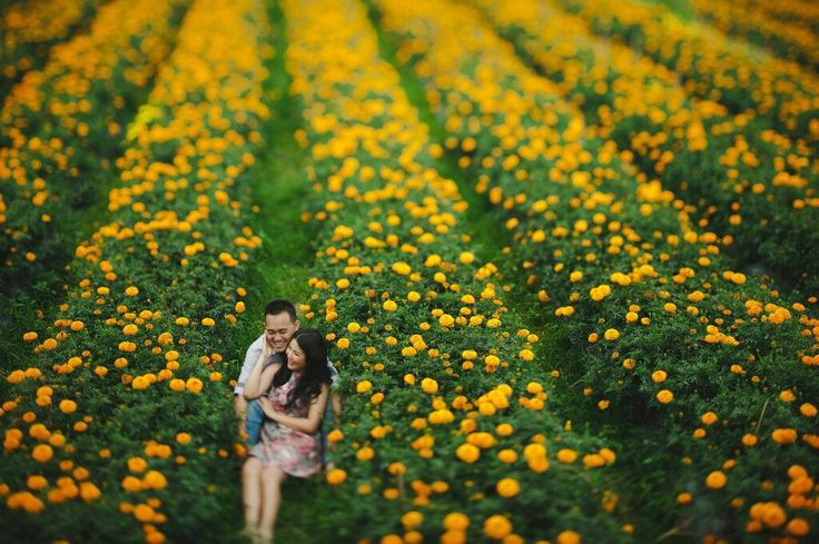 Bali Golden Fields
