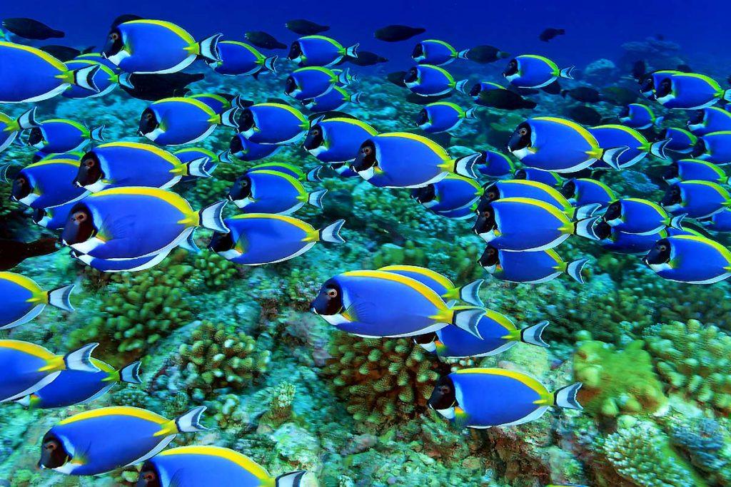 maldives waters