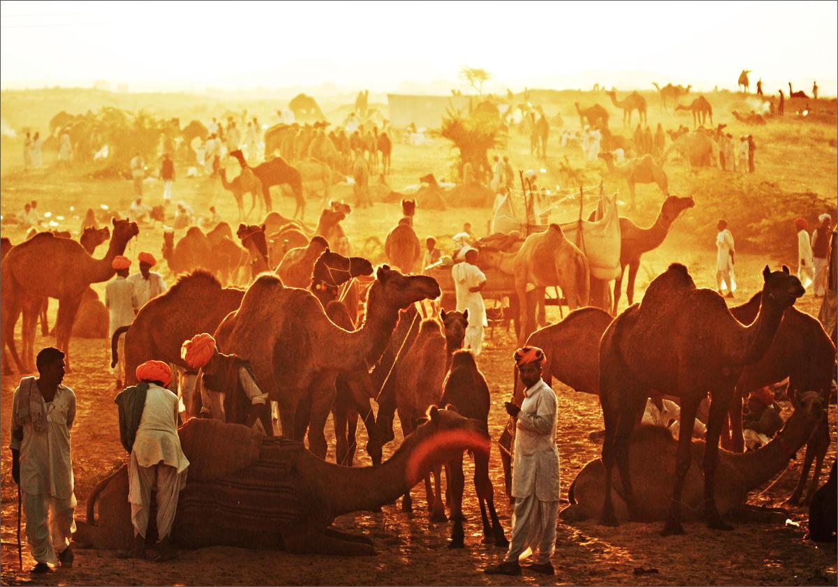 Pushkar Fair - Rajasthan