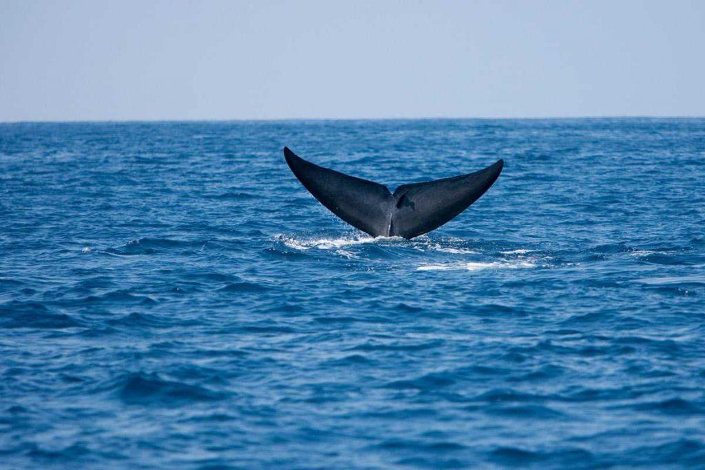 Whale Watching - Sri Lanka