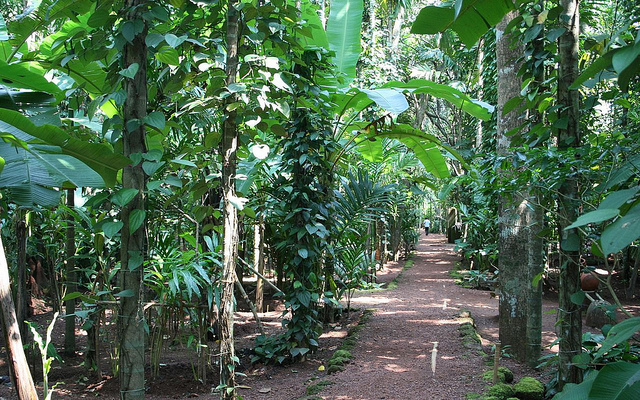 Goa – Spice farms