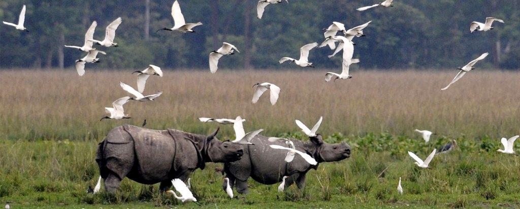 kaziranga-national-park-assam