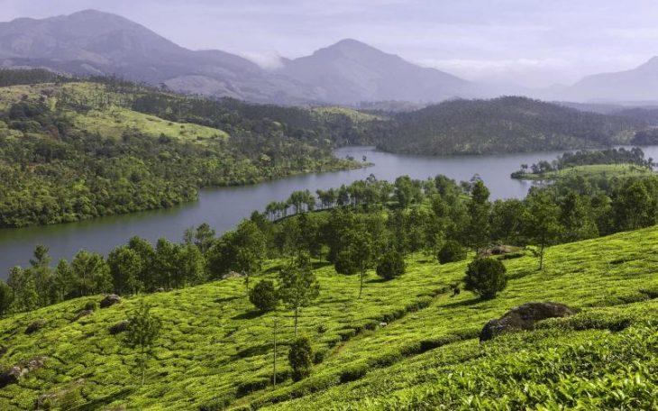 Munnar - Kerala