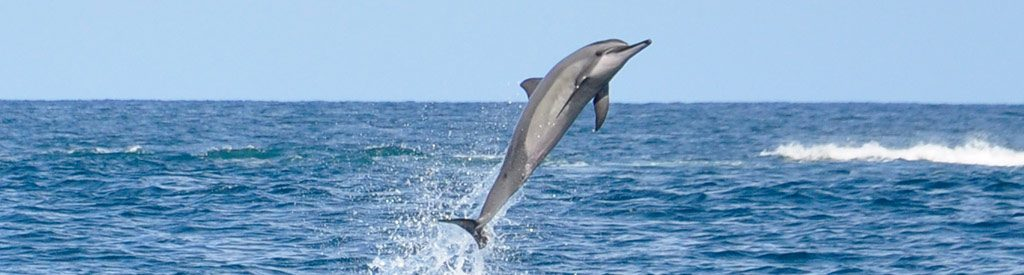 Mauritius - Dolphins