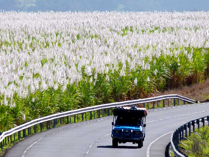 A Bollywood-style drive among the sugarcane fields