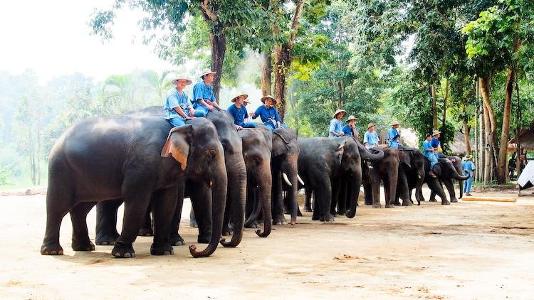 Meet the Elephants at Lampang