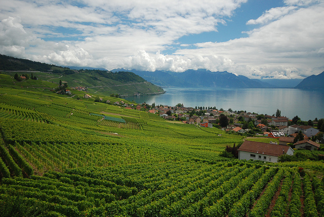 Lavaux in Switzerland