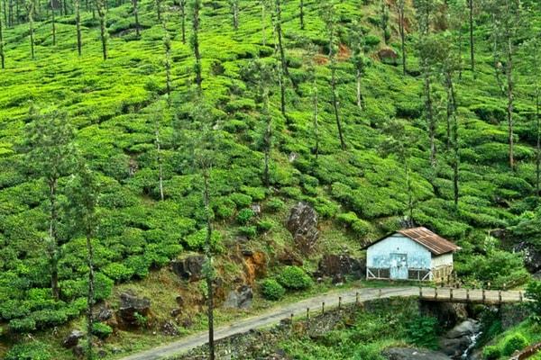 Wayanad in Kerala - Kerala hills