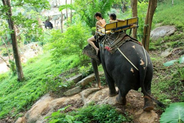 Kok Chang Safari - Things To Do In Phuket