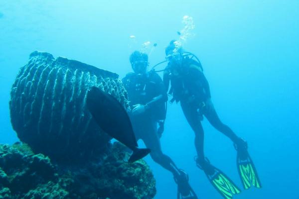 Bali - Diving