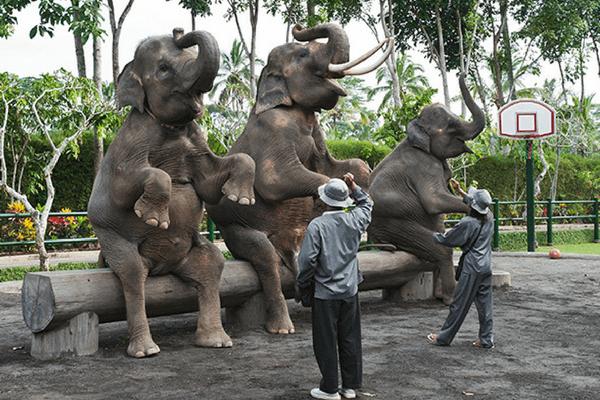 Elephant Land - Bali