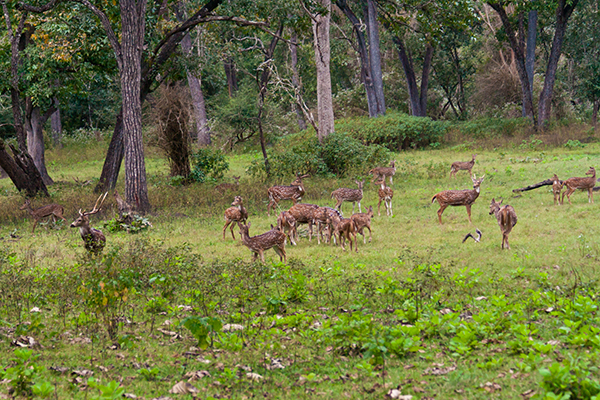Wildlife Safari in Kerala
