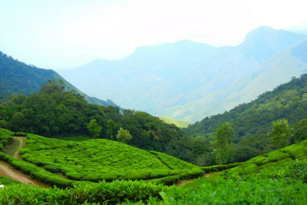 coffee plantations in wayanad You can stroll deep into acres of coffee/ spice plantations watch tea cropping and coffee bean being the brook streak resort in wayanad is strategically.