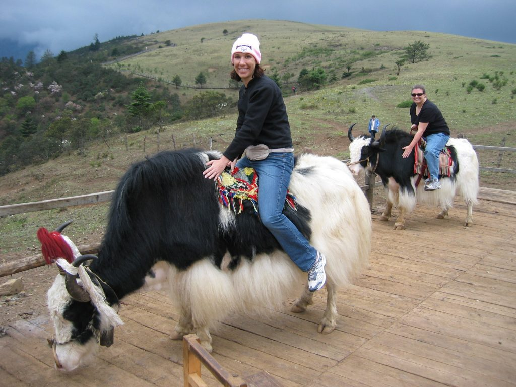 Ride a Yak in Leh