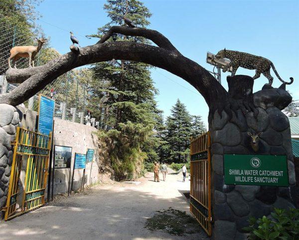 Shimla Water Catchment Sanctuary, Shimla