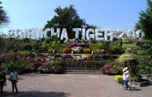 Sri Ratcha Tiger Zoo - Top 10 Things to do in Pattaya