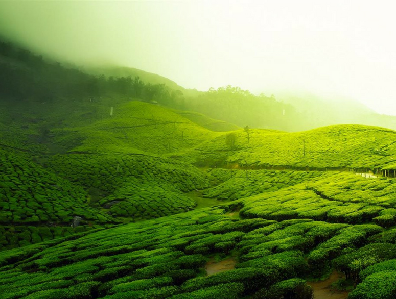 18 Places To Visit In Coorg That Are Incredibly Spectacular