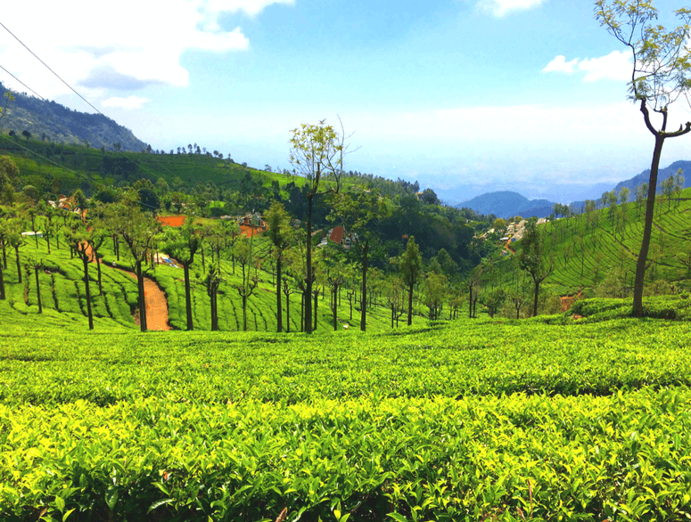 18 Places to Visit in Ooty - The Queen Of Hill Stations - Thomas Cook