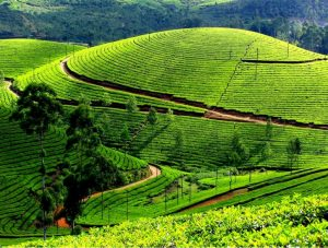 12 Stunning Places To Visit In Munnar - The Switzerland of South India