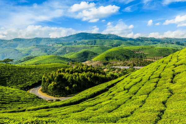 12 Stunning Places To Visit In Munnar
