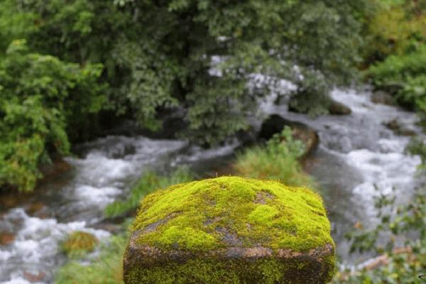 Nilakandi Falls, Coorg