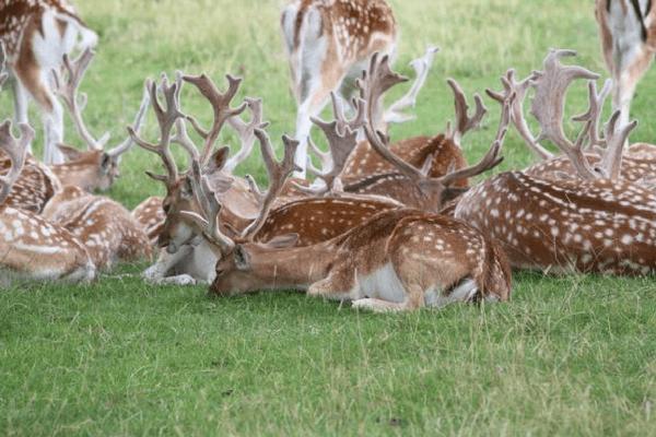 Deer Park, Bhutan