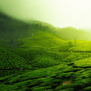 20 Places to Visit in Coorg That Are Incredibly Spectacular - Thomas Cook