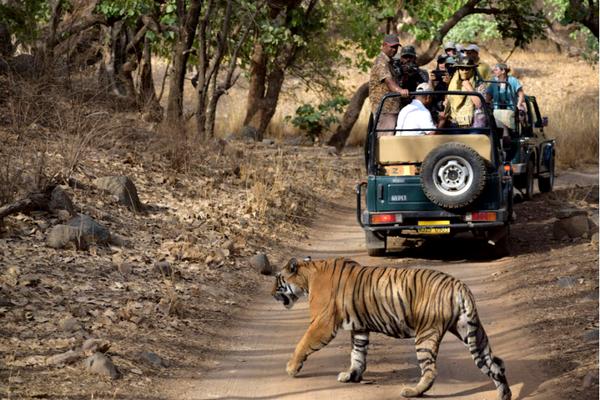 Ranthambhore National Park Rajasthan