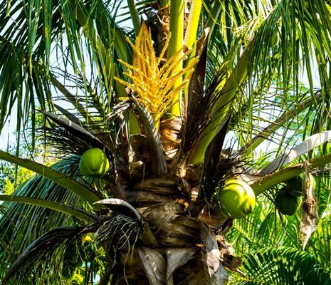 Land of coconuts Kerala - Facts About Kerala